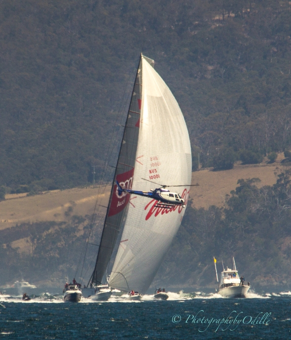 Wild Oats XI powering in towards Opossum bay before turning for the run to the finish line.