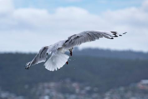dscf3949-seagull