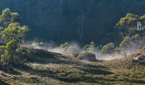 sat am mist rising DSCF0298
